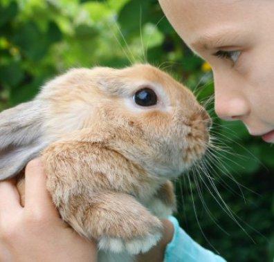 Домашній кролик