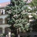 Ужгородська спеціалізована ЗОШ І-ІІІ ступенів №4